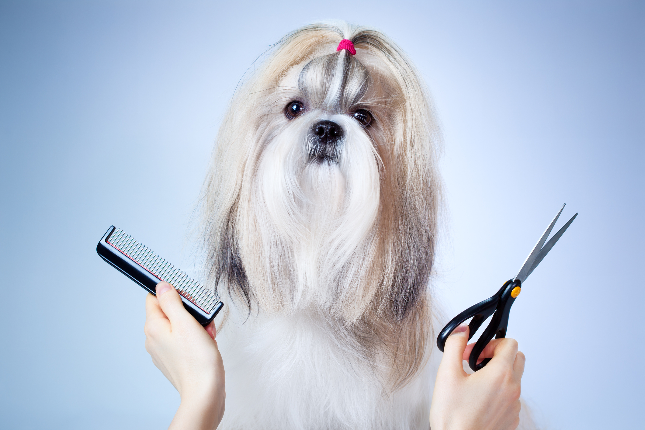 5 Traits of a Versatile Dog Grooming Logo • Online Logo Maker's Blog